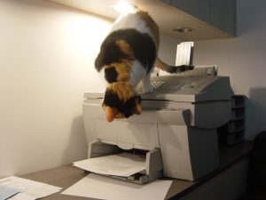 Spot will go to any measures to try to be sneakier than the printer